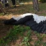 Fotók: A fán lógott az elakadt siklóernyős, a rendőrök és alpinisták szedték le