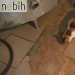 Videó: Tarka macska kódorgott a penészes sajtok között a lekapcsolt kistarcsai tejüzemben