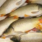 """Uniós oltalmat kapott két """"Balatoni hal"""""""