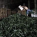Tovább gyűrűzik a spanyol uborkabotrány