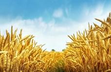 Miből sütjük a kenyeret a következő évtizedekben?