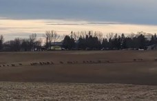 Hatalmas szarvasvonulás volt Tolnában - Videó