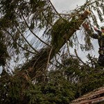 Kidőlt fák, leszakadt faágak Hajdú-Biharban – vasárnap sem lesz jobb