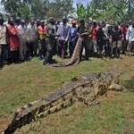 300 krokodilt mészároltak le a feldühödött indonézek