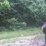 2 perc humor a vadonból: így reagáltak a csimpánzok, mikor tükör került eléjük