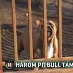 Három pitbull támadt egy 13 éves fiúra és húgára Ötvöskónyiban