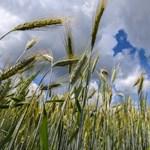 Hatéves csúcson az élelmiszerárak