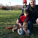 Újra a sintértelepen kötött ki a jobbikos kampány alatt befogadott kutyája