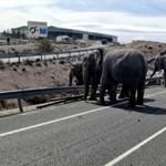 Balesetet szenvedett elefántok miatt kellett lezárni egy spanyol autópályát