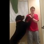 Videó: kutya állította le aspergeres gazdája önbántó rohamát