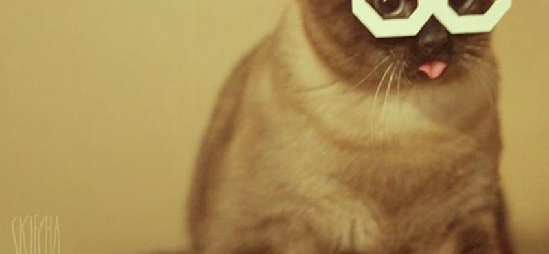 Skifcha, a papírszemüveges orosz macska (videó)