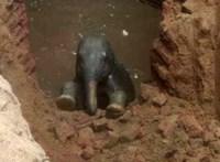 Kútba zuhant egy kiselefánt Indiában, de kimentették