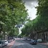 Nyolc fát vágnak ki az Andrássy úti fasorból