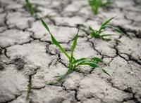 WWF: Hétfőre elfogynak a Föld éves erőforrásai