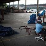 70 millió csirke pusztult bele a brazil kamionosok sztrájkjába