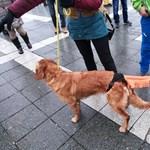 Nem tilthatta volna meg a rendőrség a Kutyapártnak, hogy Cegléden tüntessenek