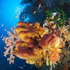 A szivacsok a vízben lévő vírusok majdnem egészét kiszűrik