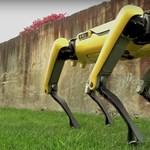 Egyszerre ámulatba ejtő és félelmetes a robotkutyát sétáltató Amazon-főnök fotója