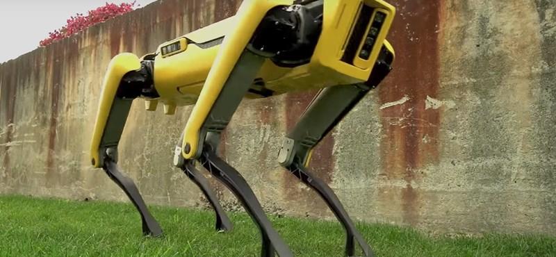 Egészen barátságos az új kutyarobot, azzal együtt is, hogy nincs feje – videó