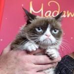10 mém, amiről örökre emlékezetes marad Grumpy Cat