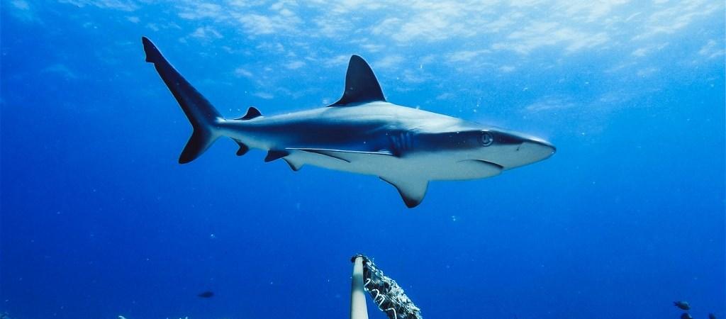 cápa zsír a prosztatitis számára