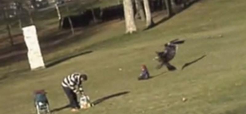 Kamu lehet a kisgyereket elragadó sasról készült YouTube-videó