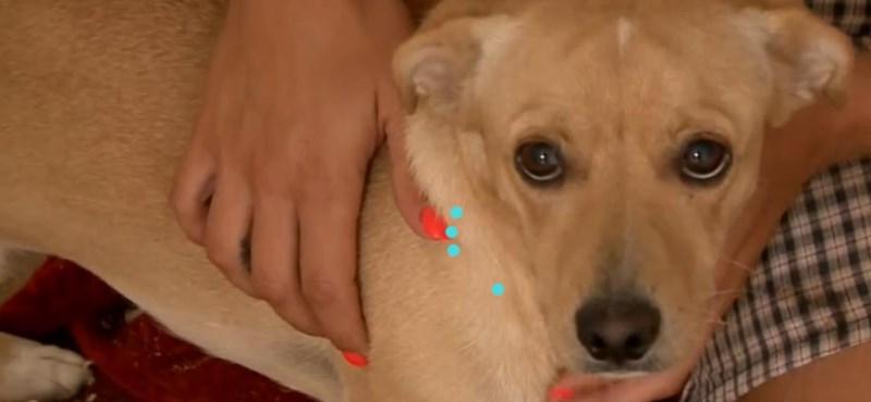 Őket értesítse, ha a petárdázás miatt elvesztette kutyáját