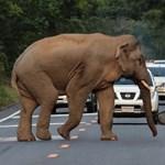 Erősebb volt az elefánt a kisbusznál