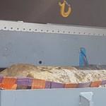 A vonatközlekedés is változik a Bozsik Stadionnál talált bomba miatt