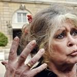 Brigitte Bardot: én az elefántokkal vagyok