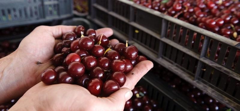 Már itt vannak a nyugati gyümölcstermelők