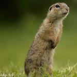 Jó helyre mennétek a természetben a családdal tavasszal? Tehetsz érte