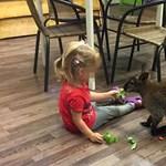 18+: Mirelit patkány mellett tartották a hamburgert az állatos kávézóban