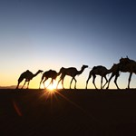 Vége az aranyéletnek: már a született szaúdiak is kénytelenek izzasztó munkát vállalni