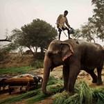 Extrém családi túrák - egzotikus helyek gyerekneveléshez