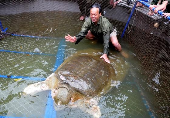 Mikor fogyott a teknős? - Fokozzák a zsírégetést