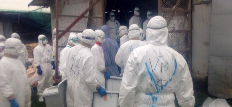 Őszig nyögik a baromfisok a madárinfluenzát