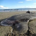 Fura szerzetet vetett partra az óceán Kaliforniában