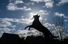 138 kutyafajta játékosságát vizsgálják, hogy elcsípjék, hogyan zajlik fajon belül az evolúció