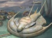 """Egy hatalmas mélytengeri """"rém"""" maradványaira bukkantak 30 km-re Ausztrália partjaitól"""