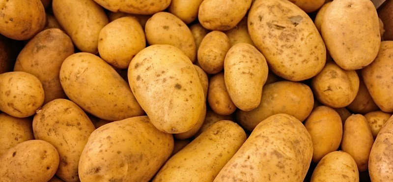 Erdélyből jött a választási krumpli Újbudára