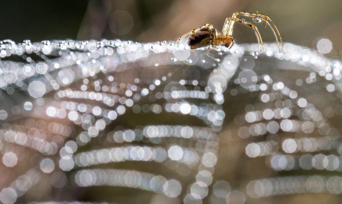 Retteg a pókoktól? Ezt a galériát ne nézze meg! – Nagyítás-fotógaléria