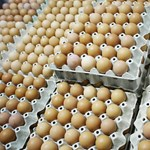 Évi 450-500 millió tojás nélkül most nem lehetne influenza elleni védőoltást gyártani