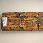 56 éven át hevert a raktárban, kiderült, hogy egy új fajt rejt a 300+ millió éves fosszília