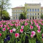 Több mint 7500 gólya kezdheti meg tanulmányait a Szegedi Tudományegyetemen