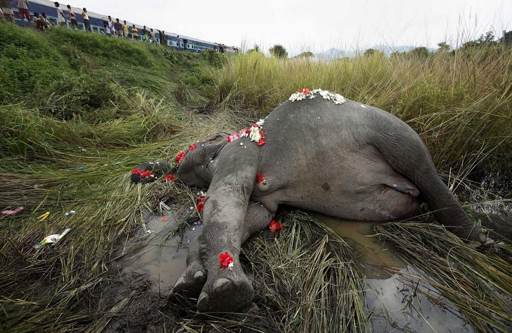 Hét képei nagyítás - Vonat gázolt el egy elefántot Panbaritól nemmessze Indiában.