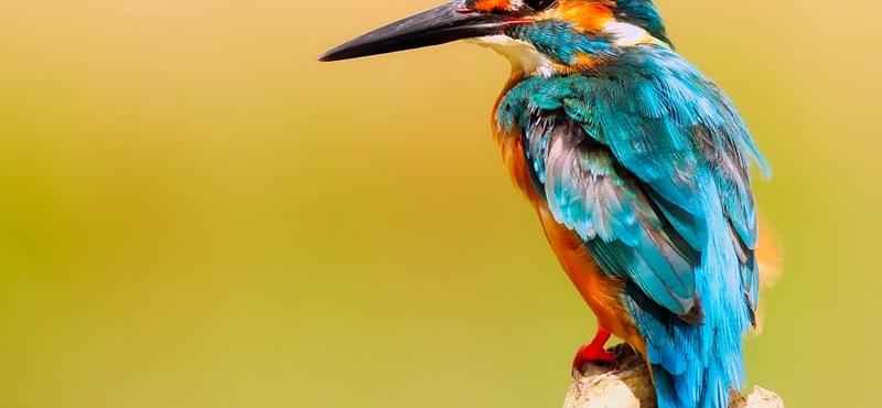 Szuper bioszteszt: mennyire ismeritek az állatokat?