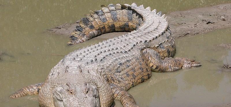 Százmillió éves volt egy tó mélyén talált krokodil