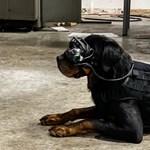 Speciális szemüveget kaphatnak az amerikai hadsereg kutyái