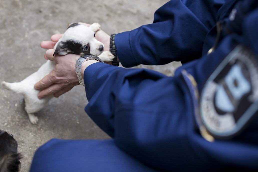 mti. hét képei - 2015.03.25. Nagykanizsa, 21 kölyökkutyát foglaltak le a letenyei határátkelőn - A letenyei határátkelőn lefoglalt kölyökkutyák egyike a nagykanizsai állatmenhelyen 2015. március 25-én. A rendőrség 21, néhány hónapos kölyökkutyát foglalt l
